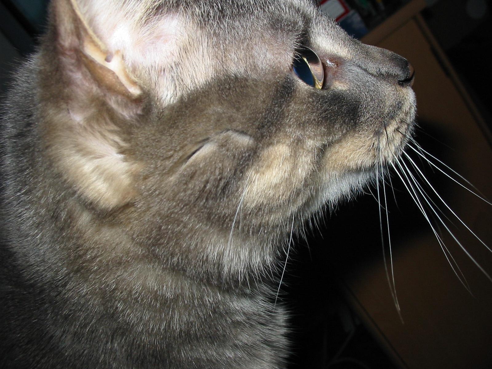 Neenah, WI USA | Dec 2004